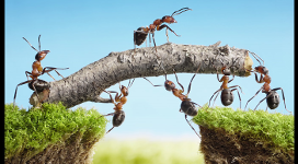 Ants1-272x150